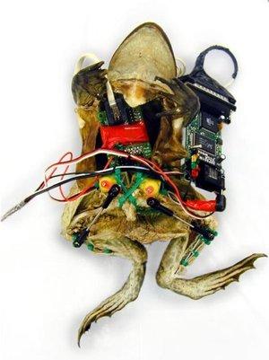 Webserverfrog